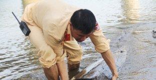 Lâm tặc phi tang gỗ lậu xuống sông rồi tẩu thoát